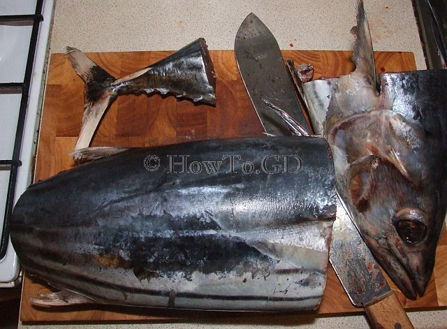 How to salt skipjack tuna for Does tuna fish have scales